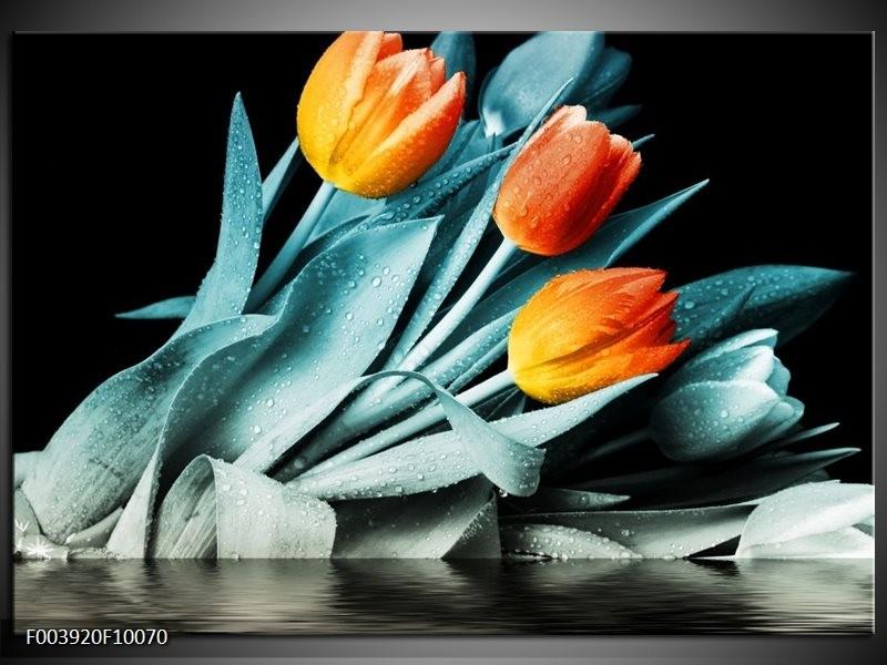 Foto canvas schilderij Tulp   Oranje, Blauw, Zwart
