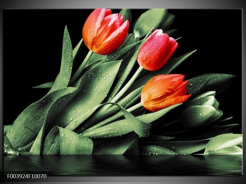 Foto canvas schilderij Tulp | Rood, Oranje, Groen