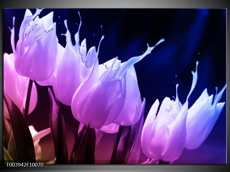Foto canvas schilderij Tulp | Paars, Zwart