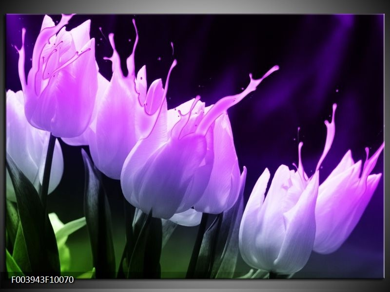 Glas schilderij Tulp   Paars, Zwart, Roze
