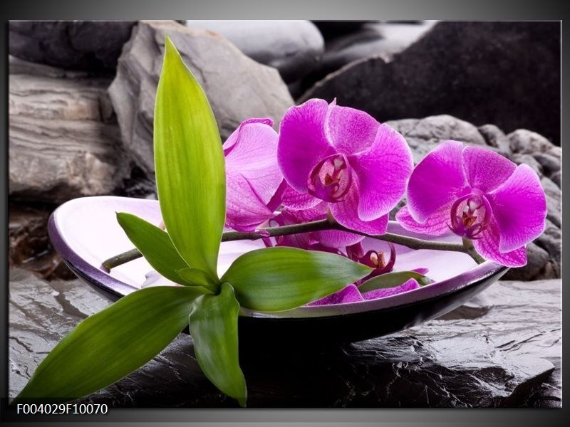 Foto canvas schilderij Orchidee | Zwart, Roze, Grijs