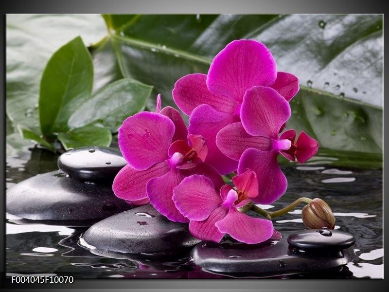Glas schilderij Orchidee   Groen, Paars, Zwart