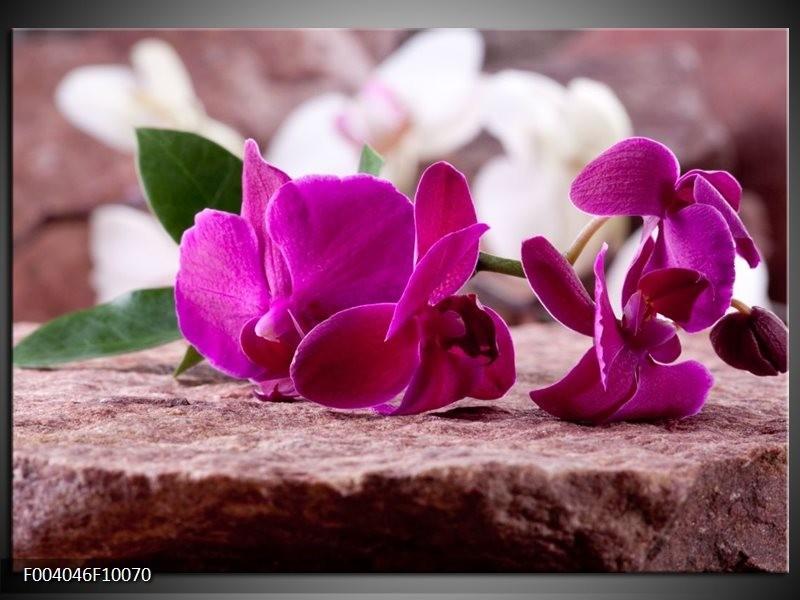 Glas schilderij Orchidee | Groen, Paars, Zwart