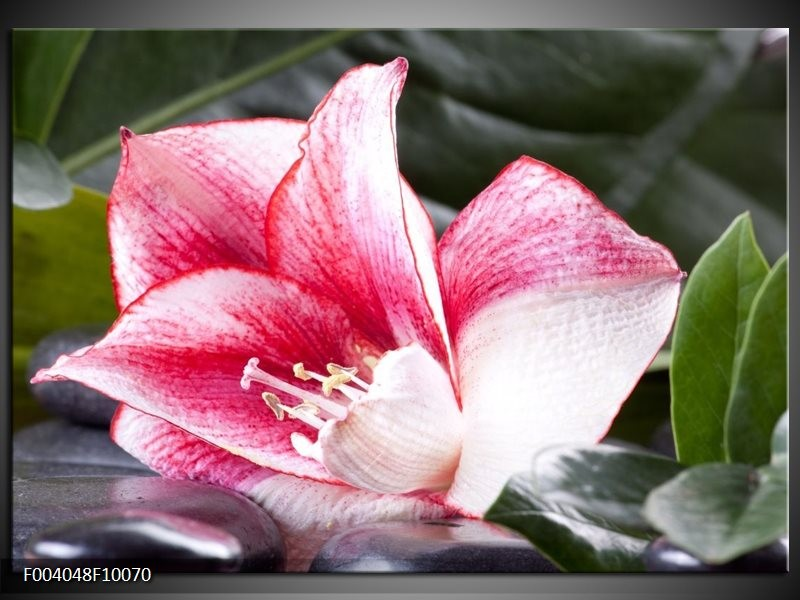 Foto canvas schilderij Bloem | Roze, Wit, Groen
