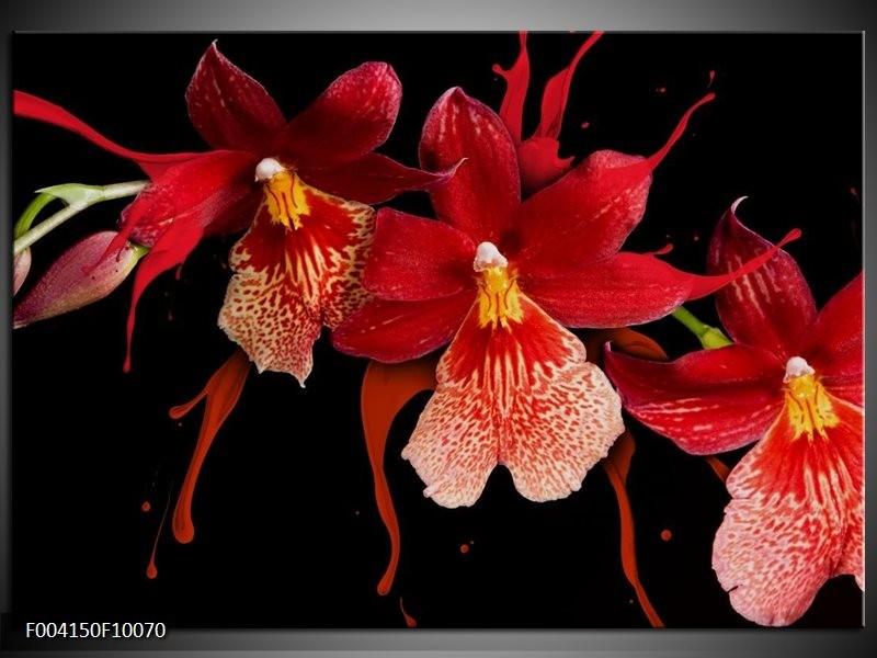Foto canvas schilderij Orchidee | Roze, Rood, Zwart,