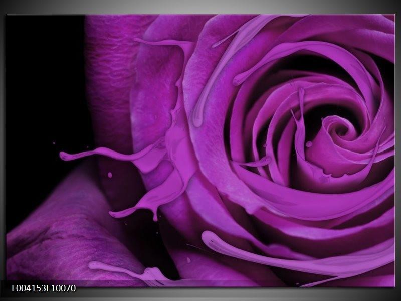 Glas schilderij Roos   Paars, Zwart