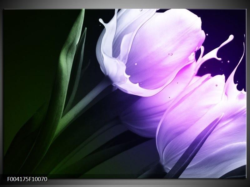Foto canvas schilderij Tulp | Groen, Paars, Zwart