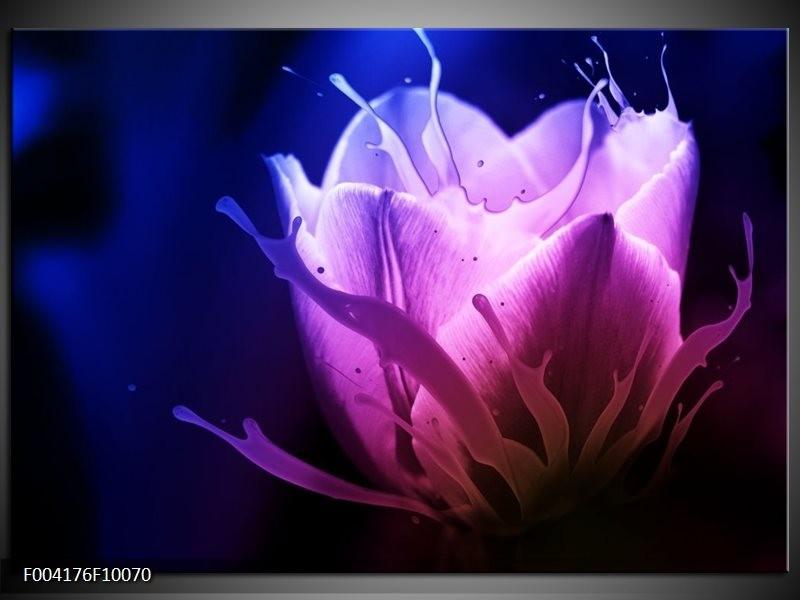 Glas schilderij Tulp   Blauw, Paars, Roze
