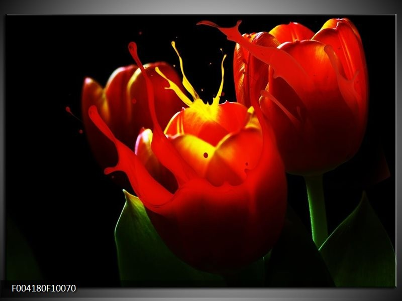 Foto canvas schilderij Tulp | Rood, Zwart, Groen