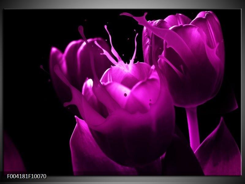 Foto canvas schilderij Tulp | Paars, Zwart, Wit