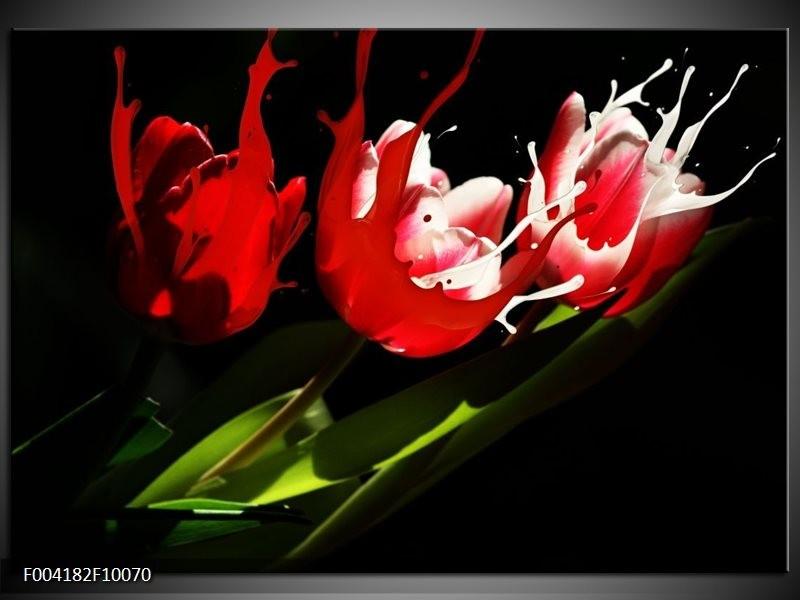Glas schilderij Tulp | Rood, Wit, Zwart