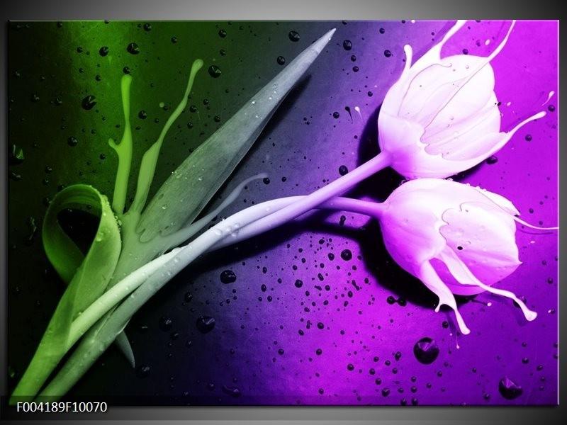 Glas schilderij Tulp | Paars, Groen