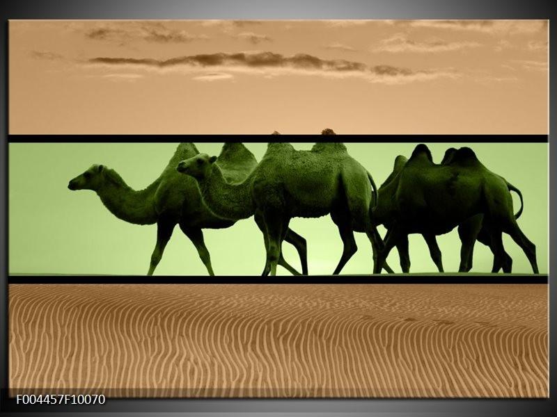 Foto canvas schilderij Kameel | Groen, Bruin, Zwart