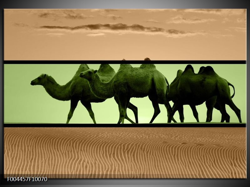 Glas schilderij Kameel | Groen, Bruin, Zwart