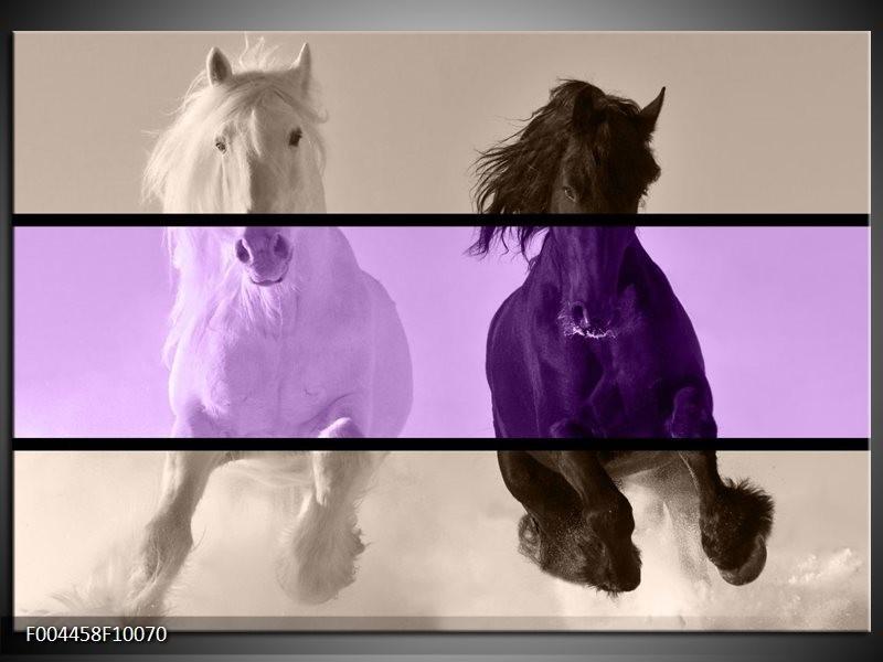 Foto canvas schilderij Paard   Paars, Zwart, Grijs