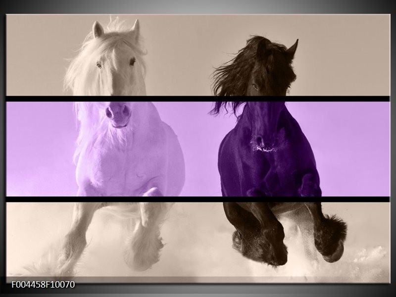 Glas schilderij Paard | Paars, Zwart, Grijs
