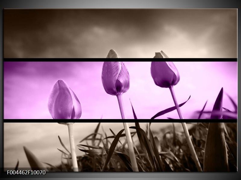 Glas schilderij Tulp   Paars, Grijs, Zwart