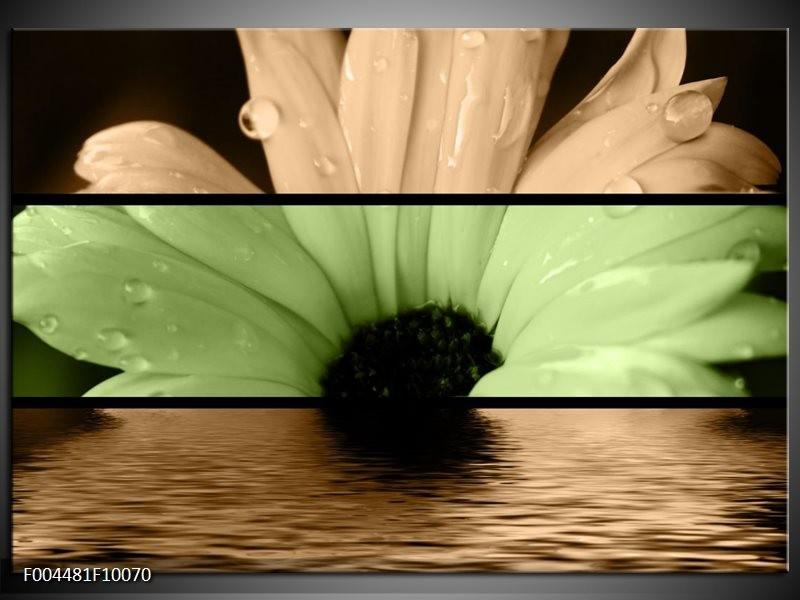 Glas schilderij Bloem | Bruin, Groen, Zwart