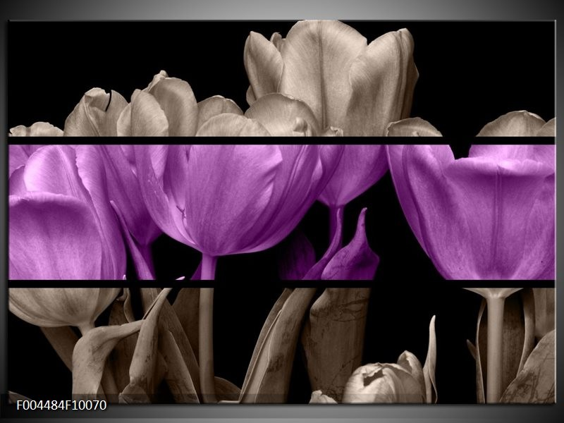 Glas schilderij Tulp | Paars, Grijs, Zwart
