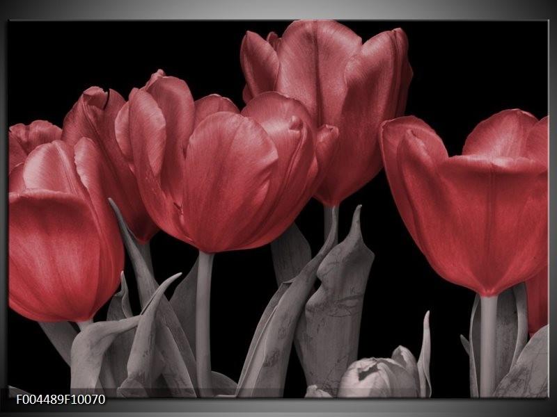 Glas schilderij Tulp | Rood, Grijs, Zwart