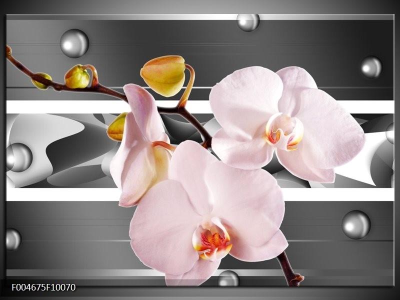 Glas schilderij Orchidee | Grijs, Roze, Wit