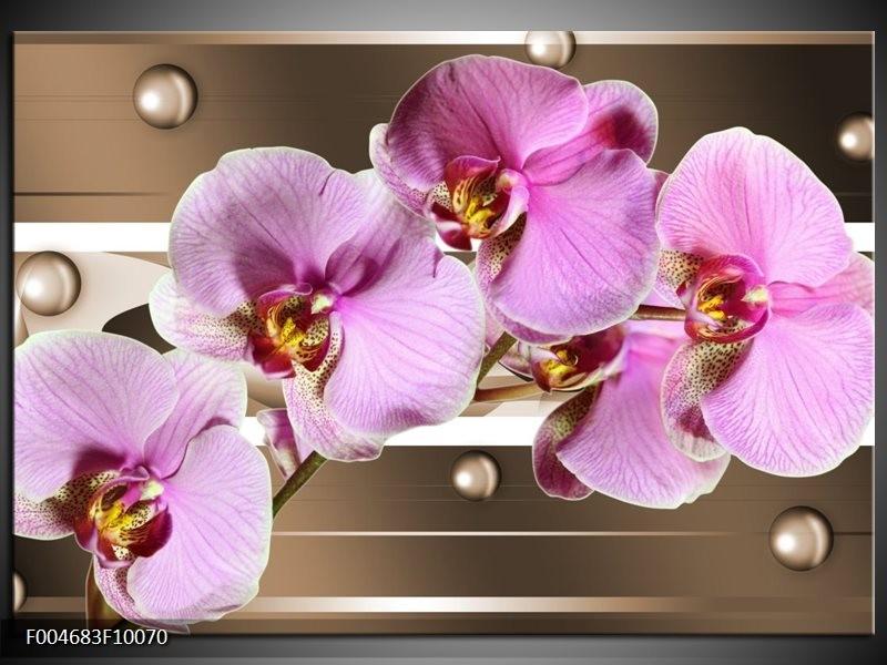 Glas schilderij Orchidee | Bruin, Paars, Roze