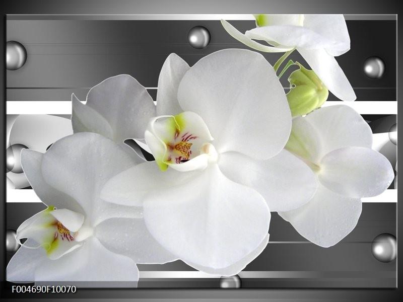Glas schilderij Orchidee | Grijs, Wit