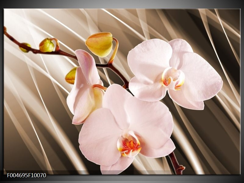 Glas schilderij Orchidee   Bruin, Roze