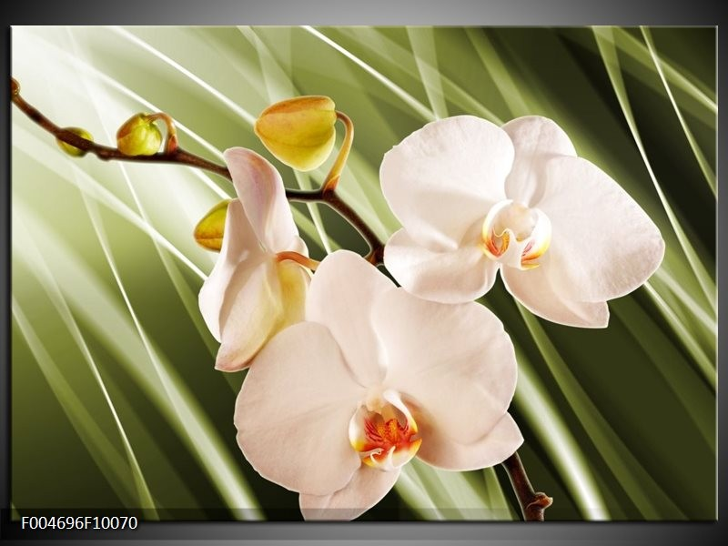 Glas schilderij Orchidee   Groen, Roze, Wit