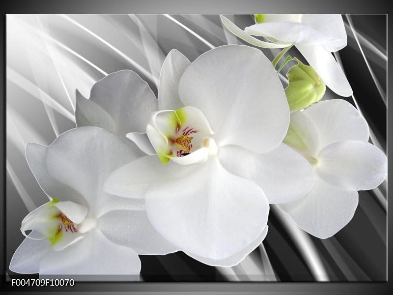 Glas schilderij Orchidee   Wit, Grijs, Groen