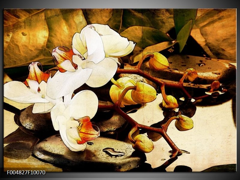 Glas schilderij Orchidee | Bruin, Wit, Groen