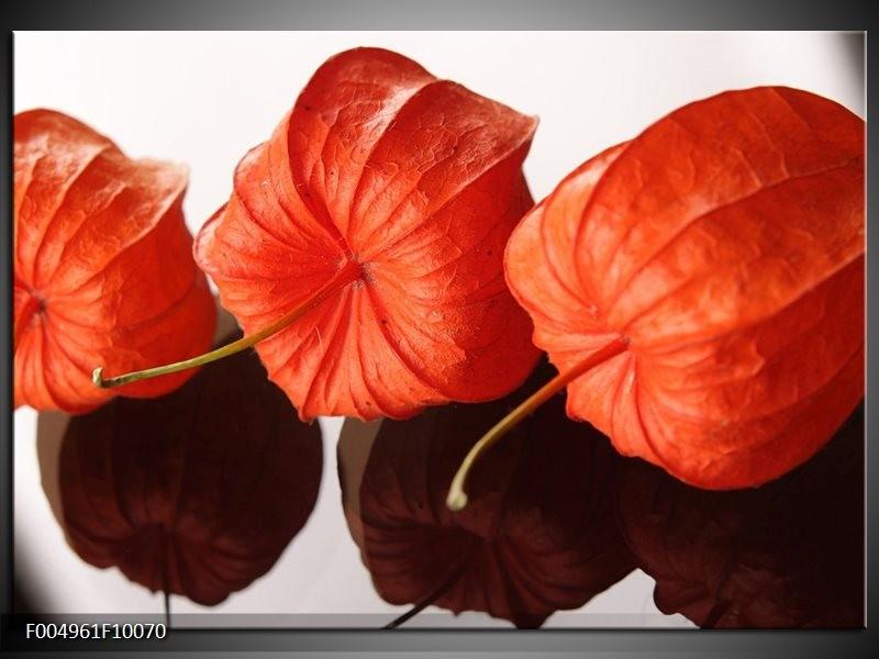 Glas schilderij Keuken | Oranje, Wit