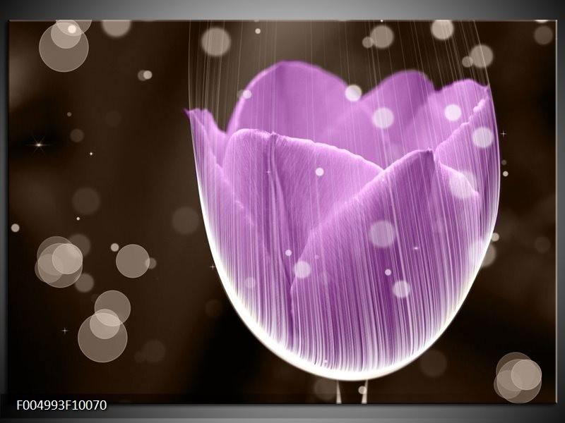 Glas schilderij Tulp | Paars, Bruin