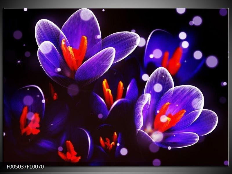 Glas schilderij Krokus   Oranje, Blauw,