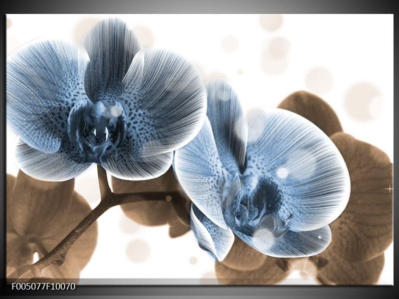 Glas schilderij Orchidee | Blauw, Grijs