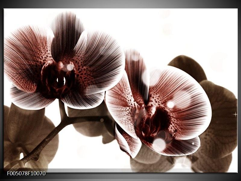 Glas schilderij Orchidee | Bruin, Wit
