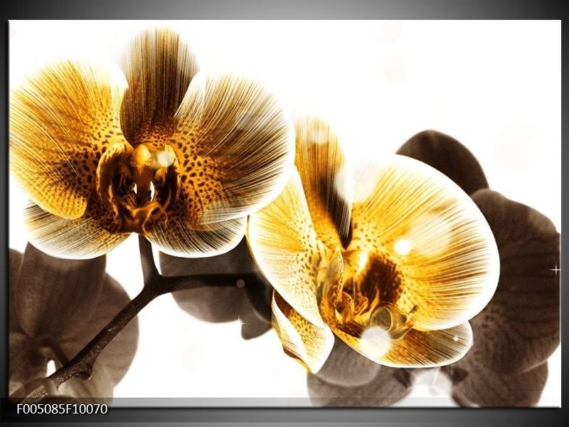 Glas schilderij Orchidee | Geel, Bruin, Wit