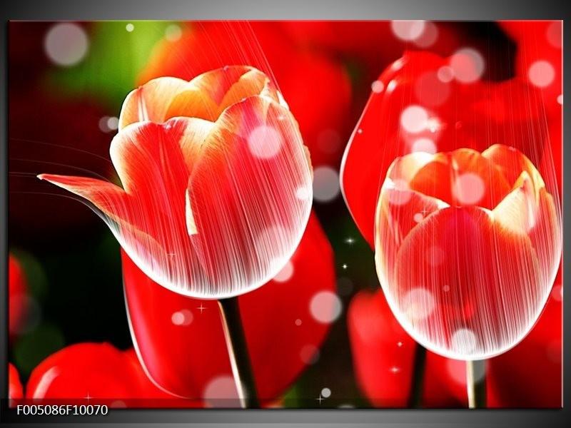 Glas schilderij Tulp | Rood, Wit