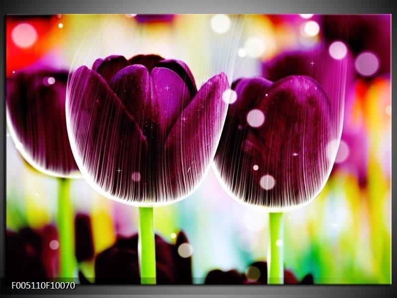 Glas schilderij Tulp | Paars, Geel,