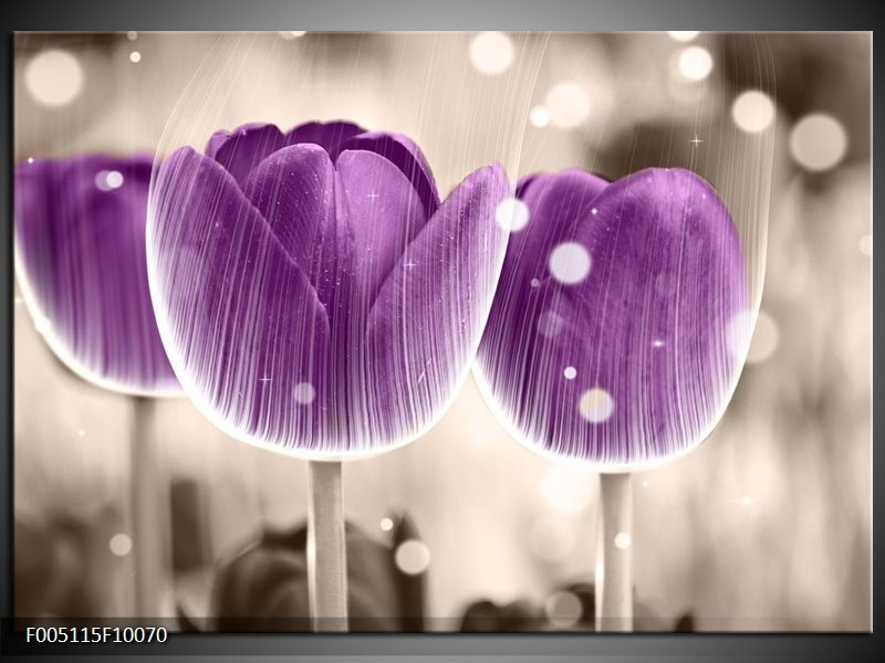 Glas schilderij Tulp | Paars, Wit