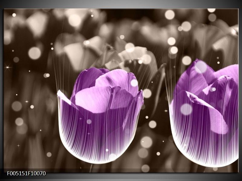 Glas schilderij Tulp   Paars, Grijs