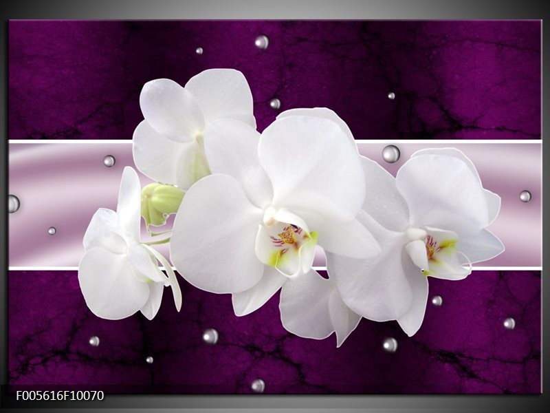 Glas schilderij Orchidee | Zwart, Wit, Paars