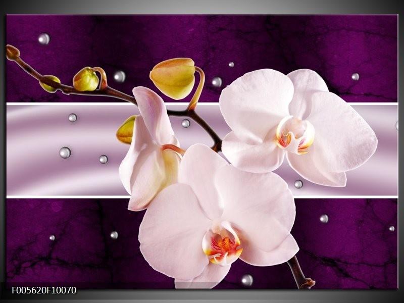 Glas schilderij Orchidee | Paars, Wit, Grijs
