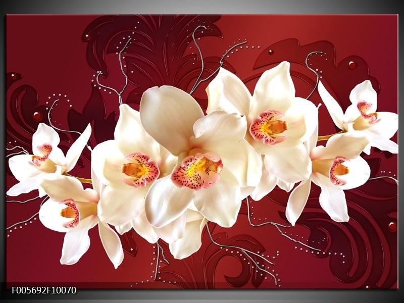 Glas schilderij Orchidee | Rood, Wit, Crème