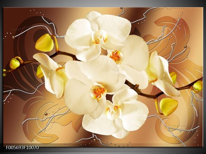 Glas schilderij Orchidee | Bruin, Crème