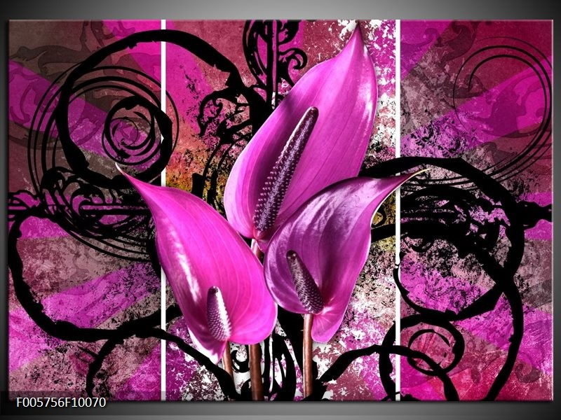 Glas schilderij Anthurium | Paars, Zwart