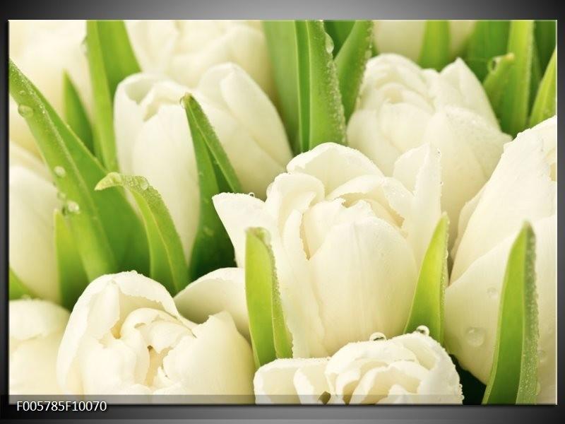 Glas schilderij Tulpen | Wit, Groen