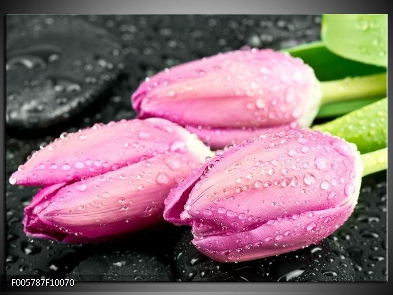Glas schilderij Tulpen | Roze, Zwart
