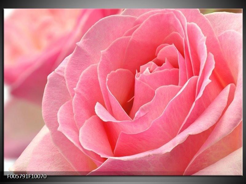Glas schilderij Roos | Roze