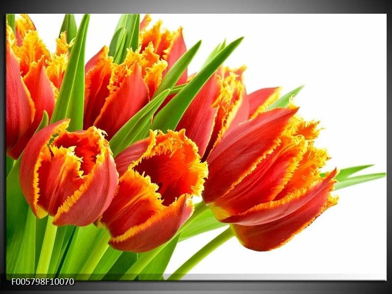 Glas schilderij Tulpen   Oranje, Groen, Wit